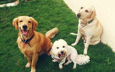 servizi dog-sitter