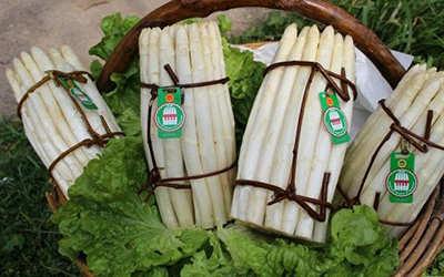 itinerari del gusto strada dell'asparago bianco di cimadolmo